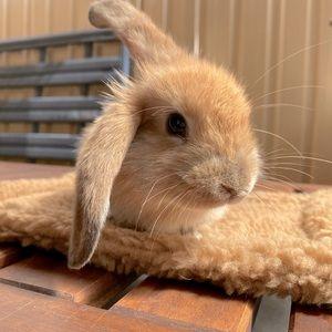 small animal sleeping mat